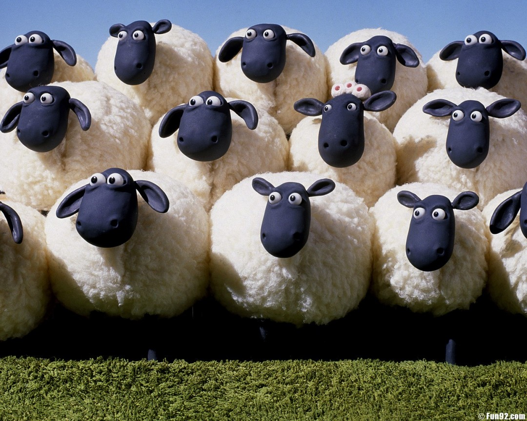 http://www.fun92.org/wallpapers/wp-content/uploads/Sheep_wallpapers_239.jpg